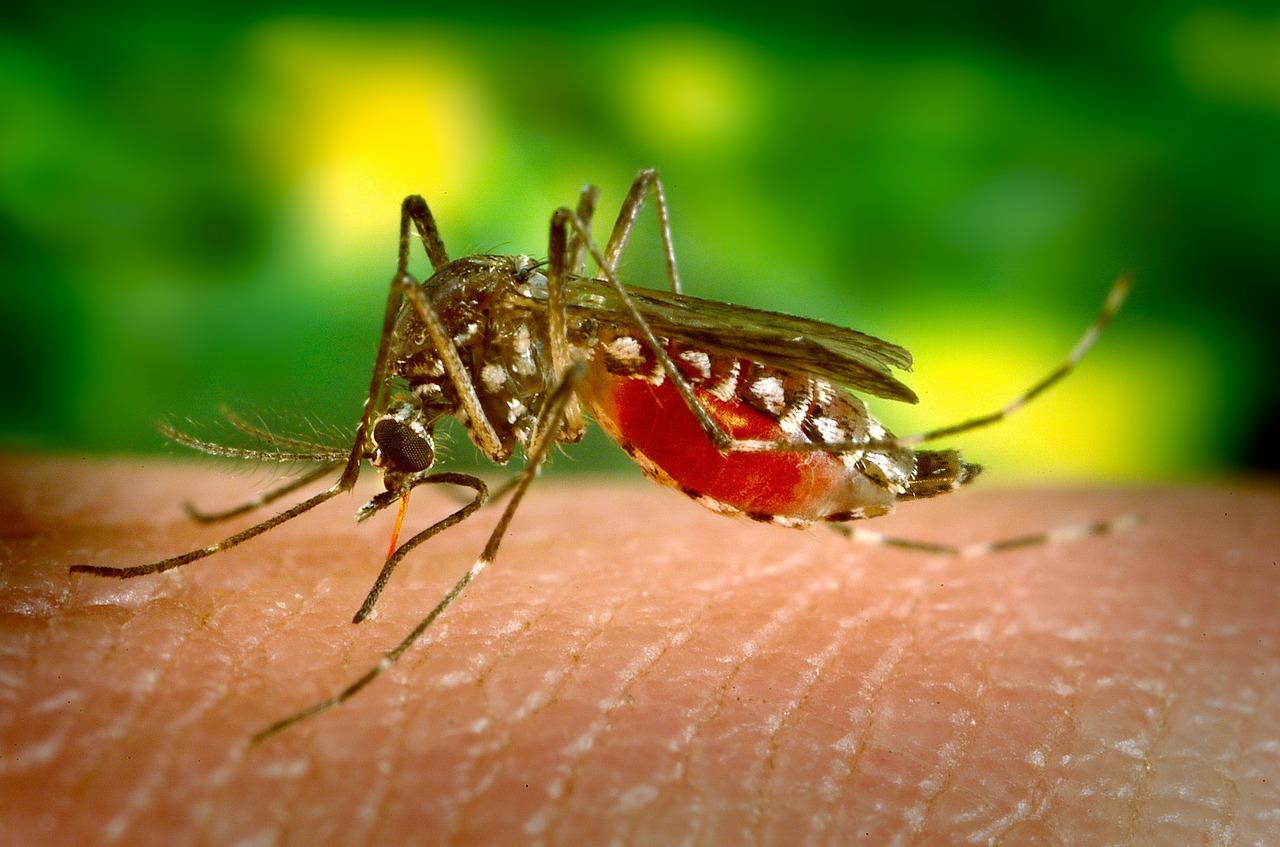 Mosquito-borne diseases has threaten World